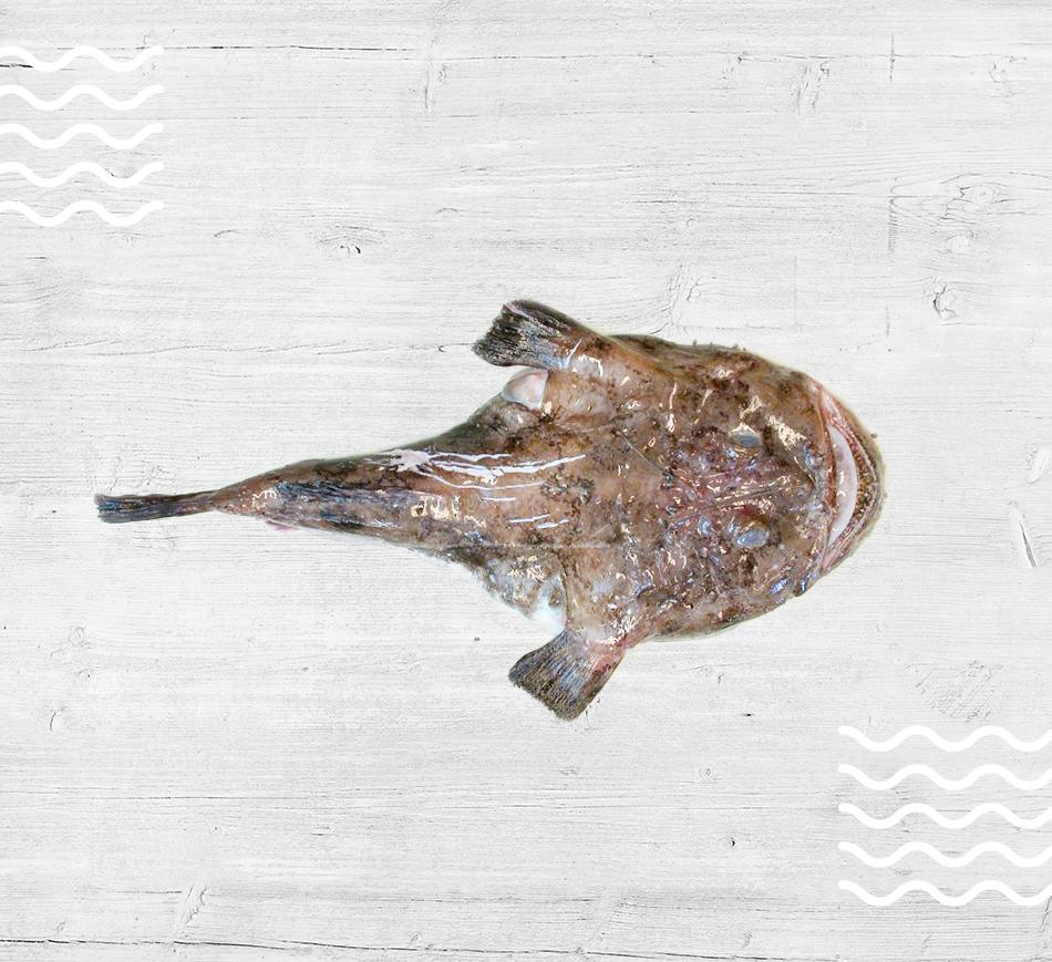 Anglerfish / Monkfish