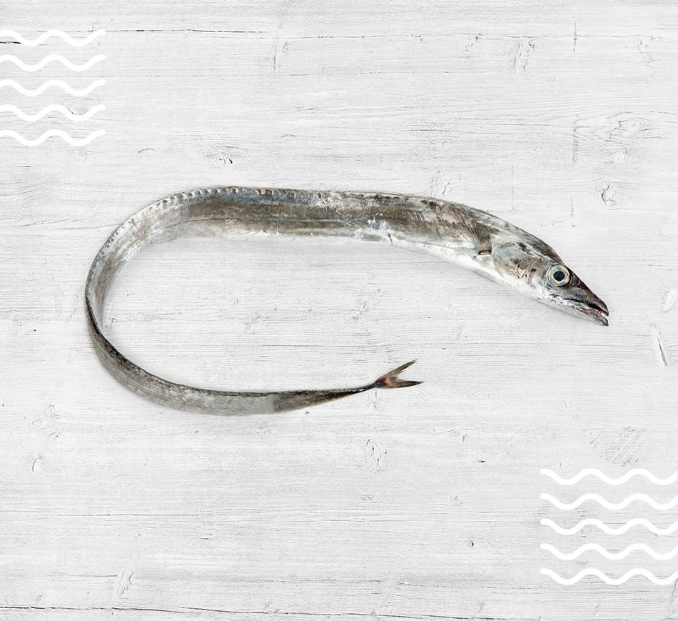 Silver Scabbardfish